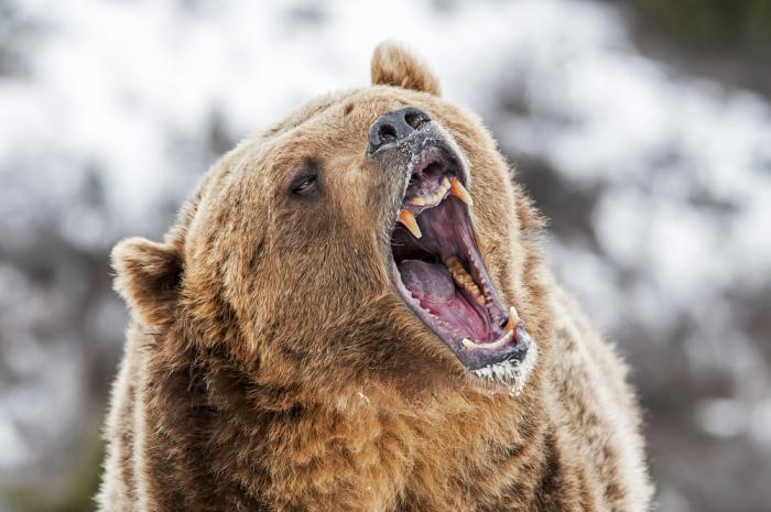 快訊 | 前摩根大通交易員Tone Vays:熊市還未結束