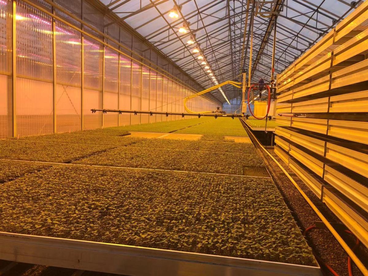 加拿大Virgo公司推出區塊鏈創新農業生態系統,將徹底改變糧食的生產方式